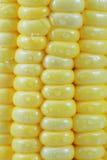 kukurudza świeża Fotografia Stock