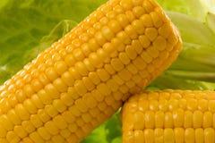 kukurudza obrazy royalty free