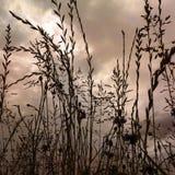 Kukurudza Zdjęcie Royalty Free