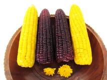 Kukurudza, gotowana żółta kukurudza i gotowana purpurowa kukurudza w drewnianej tacy, Obraz Royalty Free
