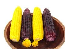 Kukurudza, gotowana żółta kukurudza i gotowana purpurowa kukurudza w drewnianej tacy, Zdjęcia Royalty Free