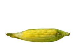 Kukurudza je białego tło Obraz Stock