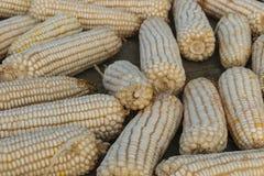 Kukurudza kłaść out na ziemi suszyć w Chiny Obrazy Royalty Free