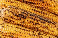 Kukurudza, kukurydza, Zea Maj Obrazy Stock