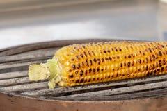 Kukurudza, kukurydza, Zea Maj Zdjęcie Royalty Free