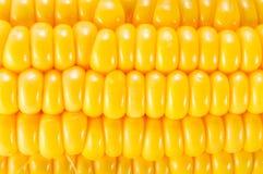 Kukurudza, kukurydzany tło Obraz Royalty Free