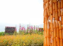 Kukurudza kwiat i gospodarstwo rolne Zdjęcia Royalty Free