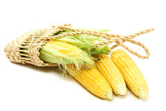 Kukurudza na biały tle Fotografia Stock