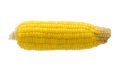 Kukurudza na białym tle Fotografia Stock