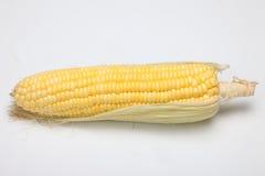 Kukurudza na białym tle Obraz Royalty Free