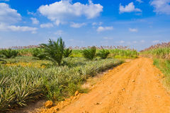kukurudza segregująca droga zdjęcie stock