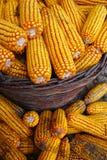 Kukurudza w koszu zdjęcie royalty free