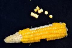 Kukurudza w organicznie uprawiać ziemię zdjęcia stock