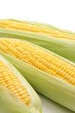 Kukurudza w ucho Zdjęcia Stock