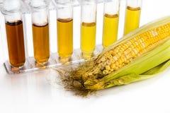 Kukurudza wytwarzał etanolu biopaliwo z próbnymi tubkami na białym backgrou Zdjęcie Stock