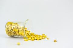 Kukurudza wytwarzający etanolu paliwo z próbną tubką Fotografia Royalty Free
