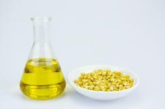 Kukurudza wytwarzający etanolu paliwo z próbną tubką Zdjęcie Stock