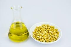 Kukurudza wytwarzający etanolu paliwo z próbną tubką Obraz Royalty Free