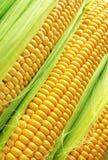 kukurudza złota Fotografia Stock