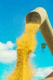 Kukurudze pszeniczny dolewanie od drymby Fotografia Royalty Free