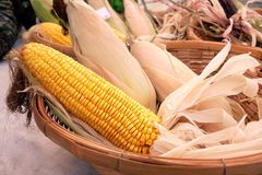 Kukurudze w koszu obraz royalty free