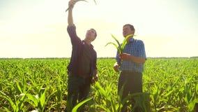 Kukurudzy dwa rolnicy chodzi przez jego pola w kierunku kamery zwolnionego tempa pola uprawnego wideo rolnictwo Kukurydzany średn zbiory