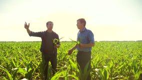 Kukurudzy dwa rolnicy chodzi przez jego pola w kierunku kamery zwolnionego tempa pola uprawnego wideo rolnictwo Kukurydzany stary zbiory wideo