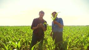 Kukurudzy dwa rolnicy studiują na smartphone odprowadzeniu przez jego pola w kierunku kamery zwolnionego tempa pola uprawnego wid zdjęcie wideo