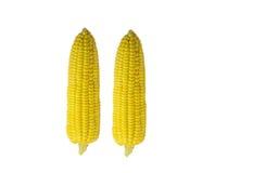 Kukurudzy głowy dwa bielu tło Fotografia Royalty Free