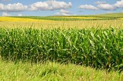 Kukurudzy gospodarstwo rolne Fotografia Stock