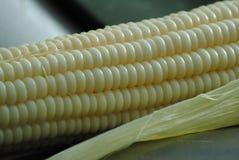 Kukurudzy grępli zakończenie up Zdjęcie Royalty Free