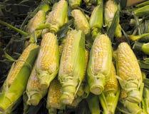 kukurudzy sprzedaż targowa organicznie Zdjęcia Stock