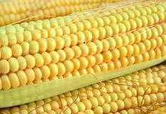 kukurydza zdjęcia stock