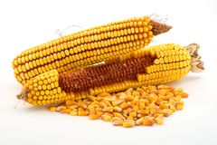 kukurydza Fotografia Stock