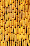 kukurydza Zdjęcia Royalty Free