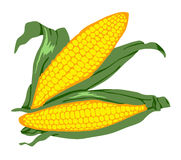 2 kukurydza Fotografia Stock
