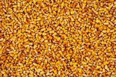 Kukurydza groszkuje teksturę Obrazy Stock