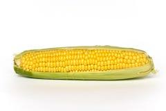 kukurydza pojedynczy white Obrazy Royalty Free