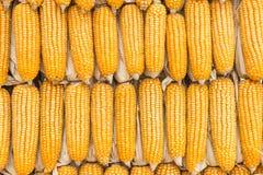 kukurydza suchej Zdjęcie Stock