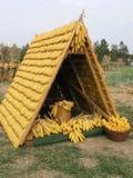 kukurydza w domu Zdjęcie Stock