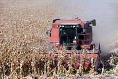kukurydza w połączeniu Zdjęcie Stock