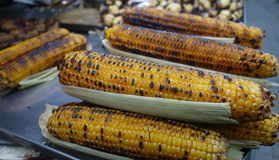 kukurydza z grilla Obraz Stock