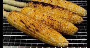 kukurydza z grilla zbiory