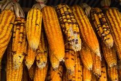 kukurydza zaschnięta Obrazy Stock