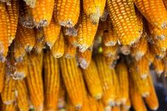 kukurydza zaschnięta Fotografia Stock