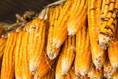 kukurydza zaschnięta Zdjęcia Stock