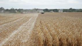 Kukurydza zbożowy żniwiarz zbierać kukurudzy na farmfield zdjęcie wideo