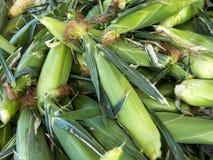 Kukurydzana kukurudza, więcej kukurudza i, Zdjęcia Stock