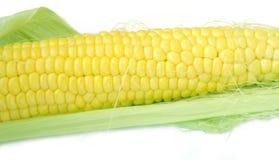 kukurydzana kukurydza Obrazy Royalty Free