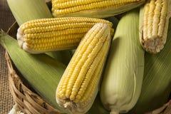 Kukurydzana kukurydza i popkorny łączyliśmy na stole Obraz Royalty Free